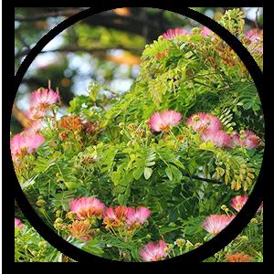 vagai flower